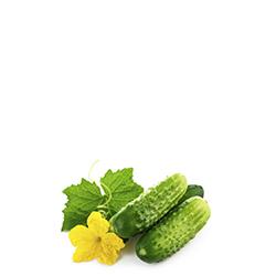estratto di cetriolo